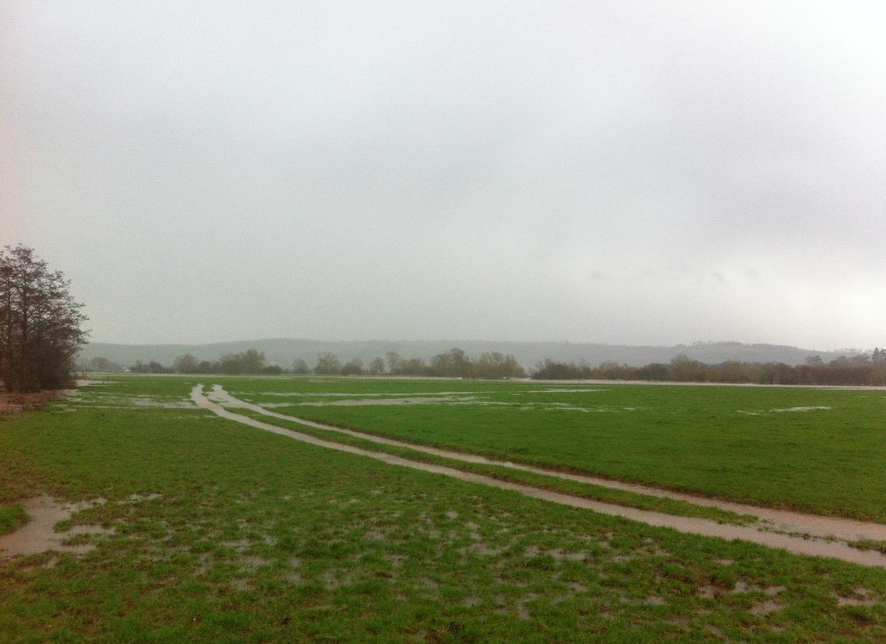 somewhere in a field in Devon